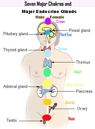 chakras endocrine glands – TRANSITIONS