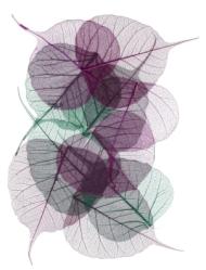 302x397 dk purple & green
