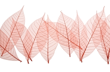 red row leaves